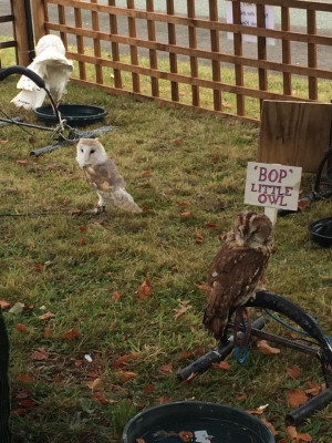 three owls explore the garden